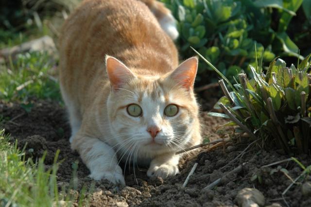 Les chats, les chiens, et autres chouchoux.... - Page 7 Dsc_0012