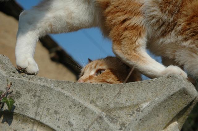 Les chats, les chiens, et autres chouchoux.... - Page 7 Dsc_0014