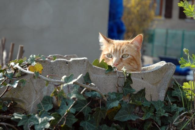 Les chats, les chiens, et autres chouchoux.... - Page 7 Dsc_0016