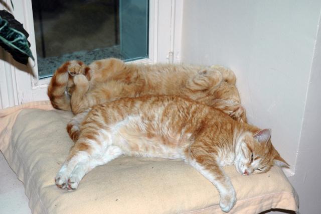 Les chats, les chiens, et autres chouchoux.... - Page 7 Janv0710