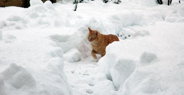 Les chats, les chiens, et autres chouchoux.... - Page 7 Nemo_010