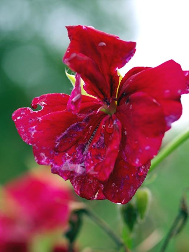 Macro photo de fleurs 1411