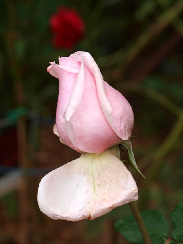 Macro photo de fleurs 811