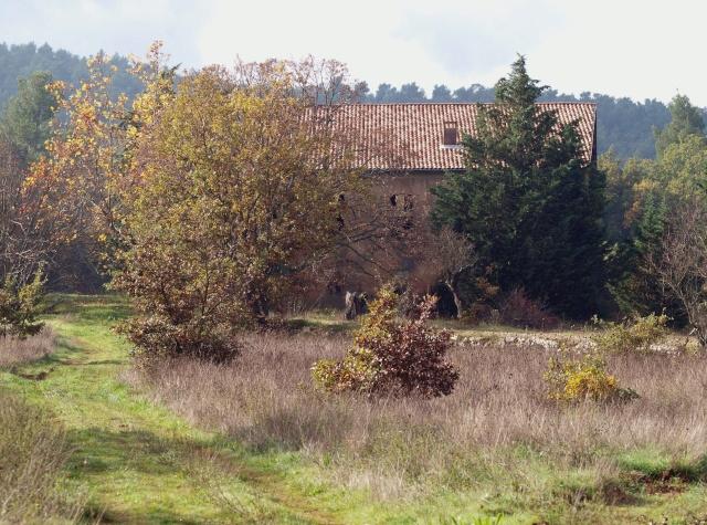 Champignons de nos forêts Pb113511