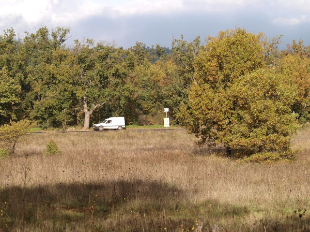 Champignons de nos forêts Pb113512