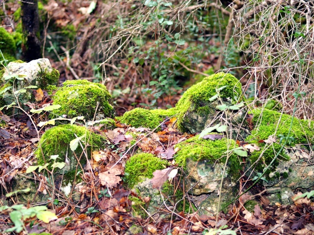 Champignons de nos forêts Pb113513