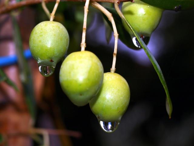 Macro photos aprés la pluie,  dans mon petit jardin ...... Photo139