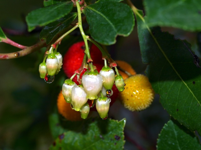 Macro photos aprés la pluie,  dans mon petit jardin ...... Photo141