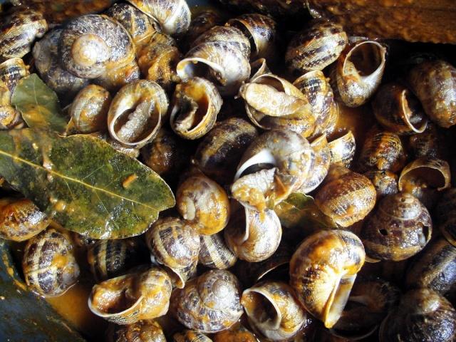 """Escargots """" Petits gris à la suçarelle """" et sauce piquante de maëlie Photo_11"""