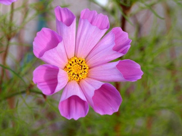 Macro photo de fleurs Photo_17