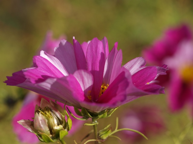 Macro photo de fleurs Photo_19