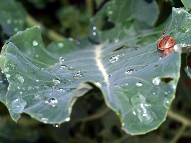 Macro photos aprés la pluie,  dans mon petit jardin ...... Photo_40