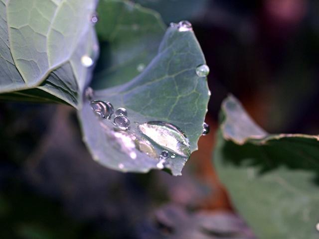 Macro photos aprés la pluie,  dans mon petit jardin ...... Photo_42