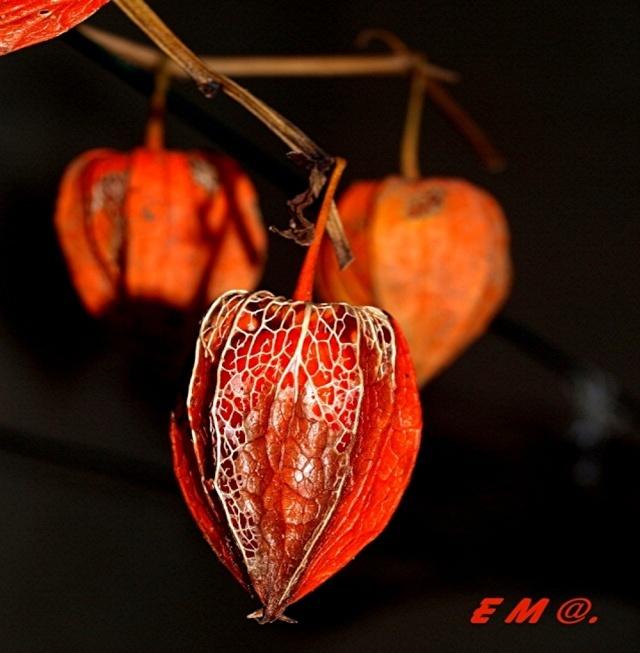 Macro photo de fleurs Projet10