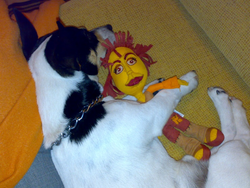 Os nossos animais de estimaçao!!! 20071210