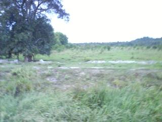tanah di kg padang nenas kustem 1 ekar tuk dijual 70k sahaja Dsc00913