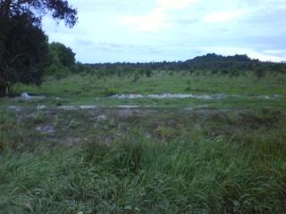 tanah di kg padang nenas kustem 1 ekar tuk dijual 70k sahaja Dsc00914