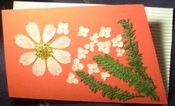 Presovano cvece Crvena12
