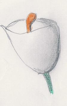 Dibujitos de Flores Cala10