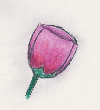 Dibujitos de Flores Tulipa10