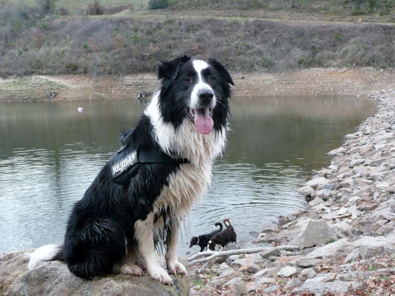Vos chiens et leurs harnais! Photo  P1040810