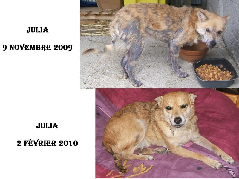 Avant / Après : Comment un animal peut devenir beau grâce à l'amour - Page 3 Julia_10