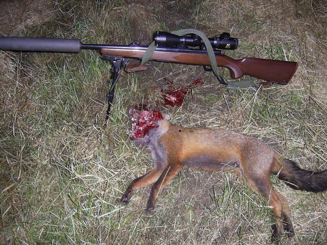 Charlie head shot Foxhea11