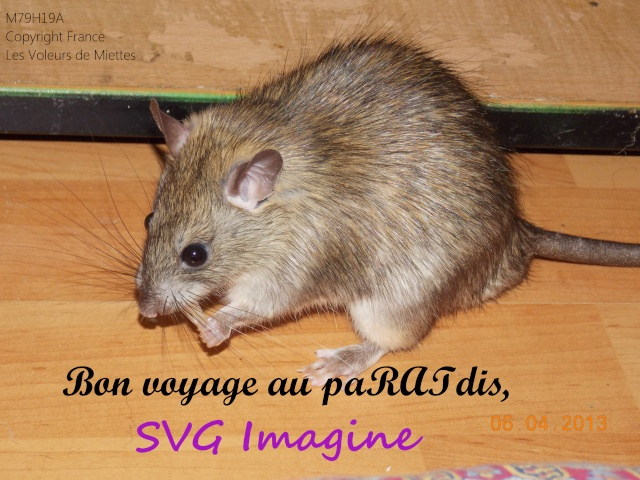 [Site sur les animaux] Les Voleurs de Miettes - Page 5 Dscn6410