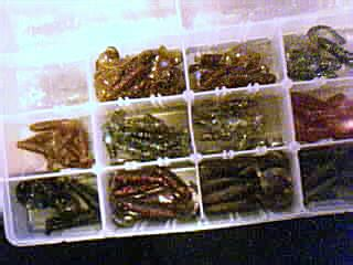 plano box of worms Pictur15