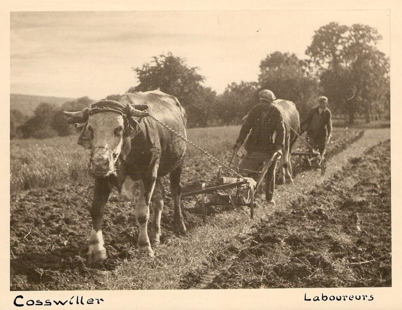 La vie à la campagne autrefois - Page 2 Scan0513
