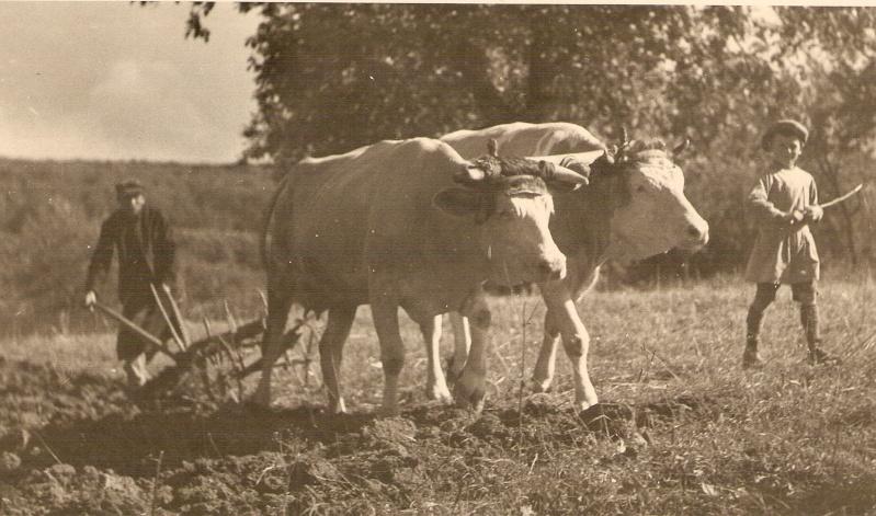 La vie à la campagne autrefois - Page 2 Scan0514