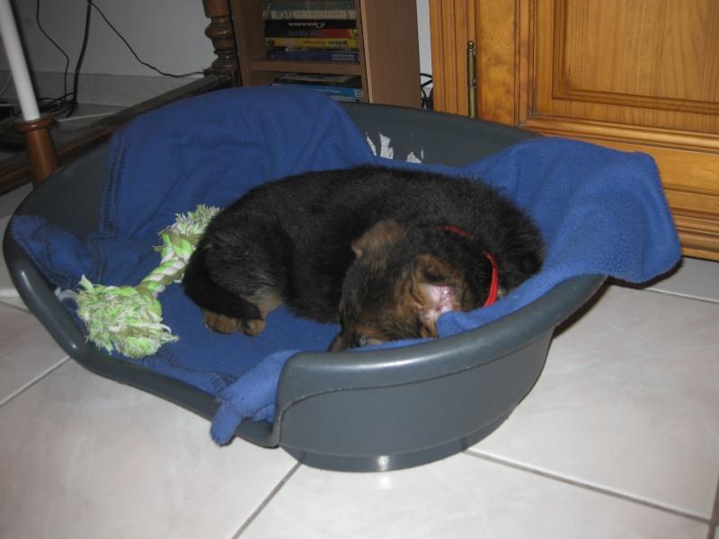 cherche affaires gros chien Fitji_10