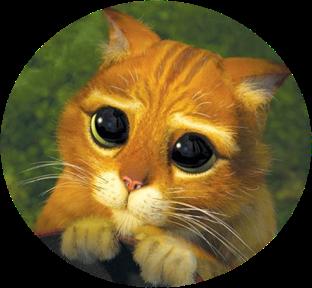 FARANDOLE - Femelle tigrée rousse de 1 an Chat_p10
