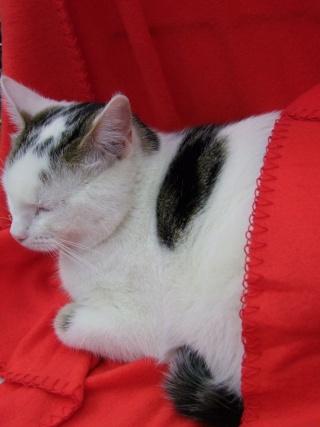 MELODIE - 2 ans - Femelle blanche et marbrée marron Dscf4714