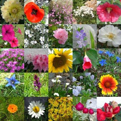 Fleurs en émoi  Fleurs10