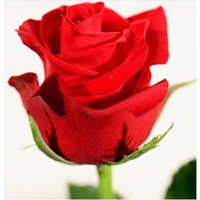 Le  petit lit Roses11