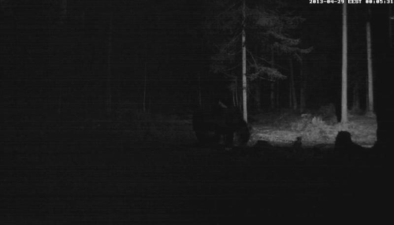 Alataguse Bear Cam 2013 - Page 2 Vlcsna16