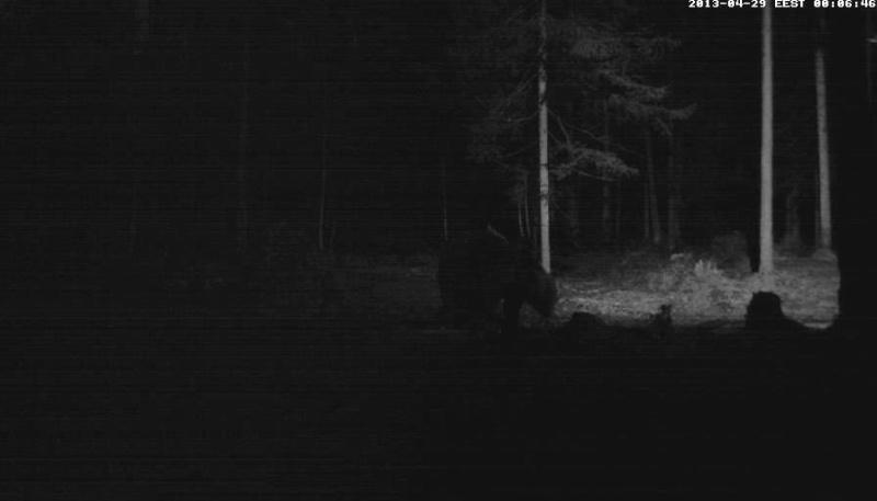 Alataguse Bear Cam 2013 - Page 2 Vlcsna17