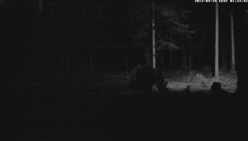 Alataguse Bear Cam 2013 - Page 2 Vlcsna19