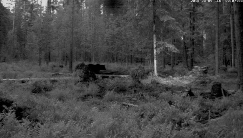 Alataguse Bear Cam 2013 - Page 3 Vlcsna22