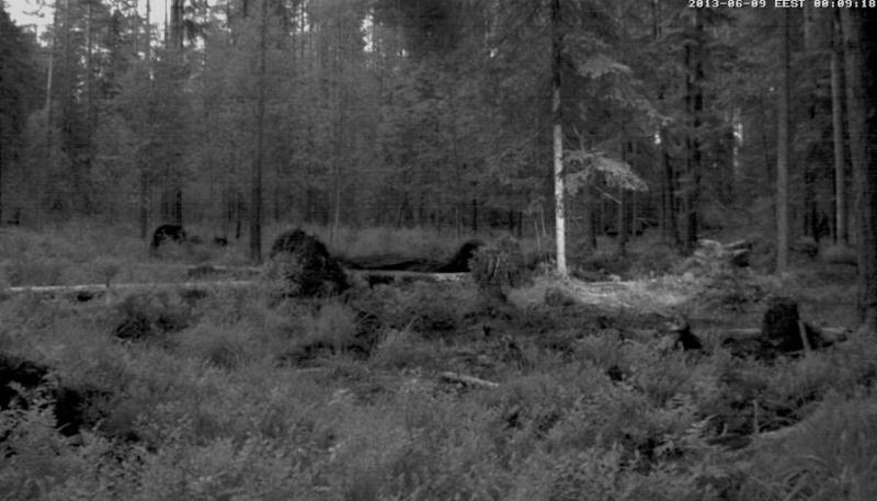 Alataguse Bear Cam 2013 - Page 3 Vlcsna23