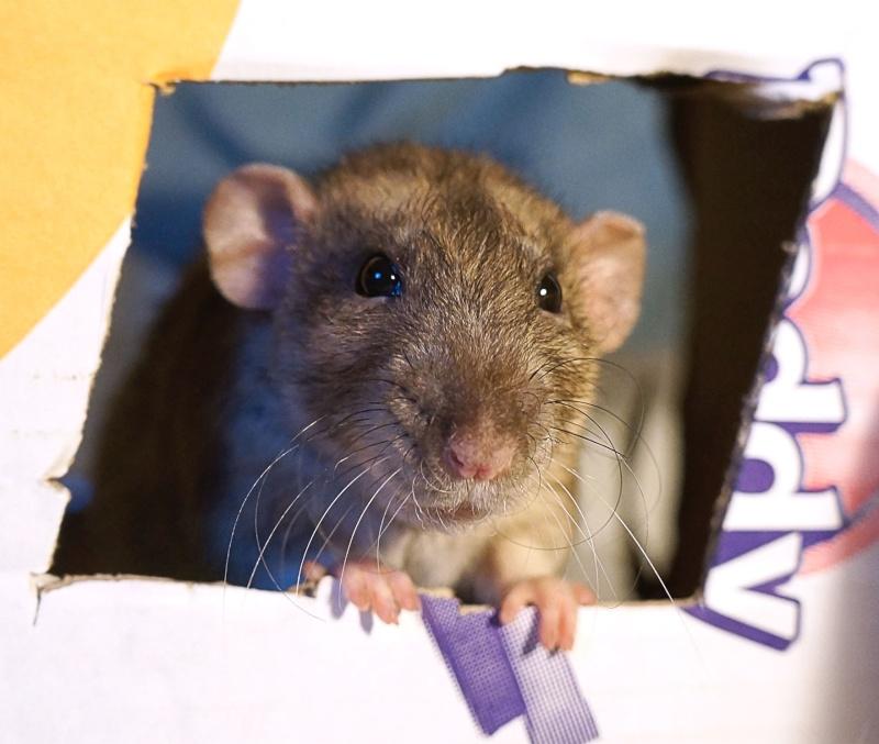 Sauvetage des 25 rats dans les Landes - Page 11 Dsc06920