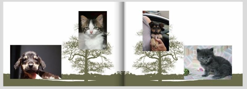 Livre photos 2010 - commande terminée Livrep10