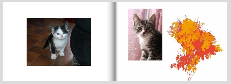 Livre photos 2010 - commande terminée Livrep11