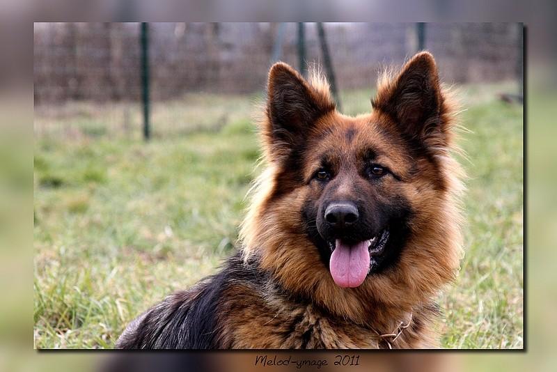 Portrait d'un berger 611