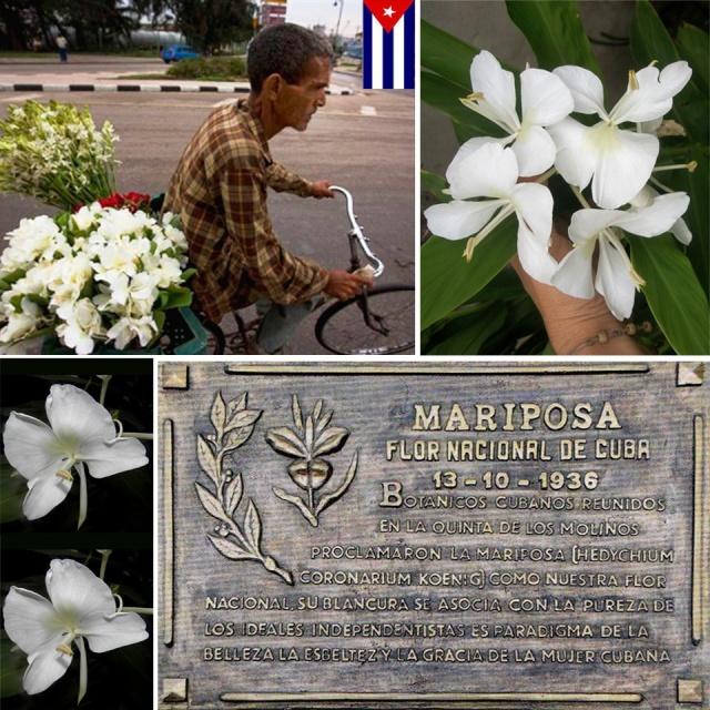 LA MARIPOSA FLOR NACIONAL DE CUBA 67987_10