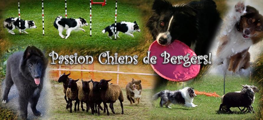Passion Chiens de Bergers!