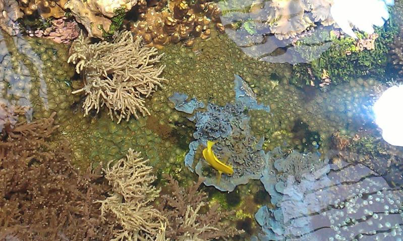 aquarium de Boulogne sur mer Imag0515