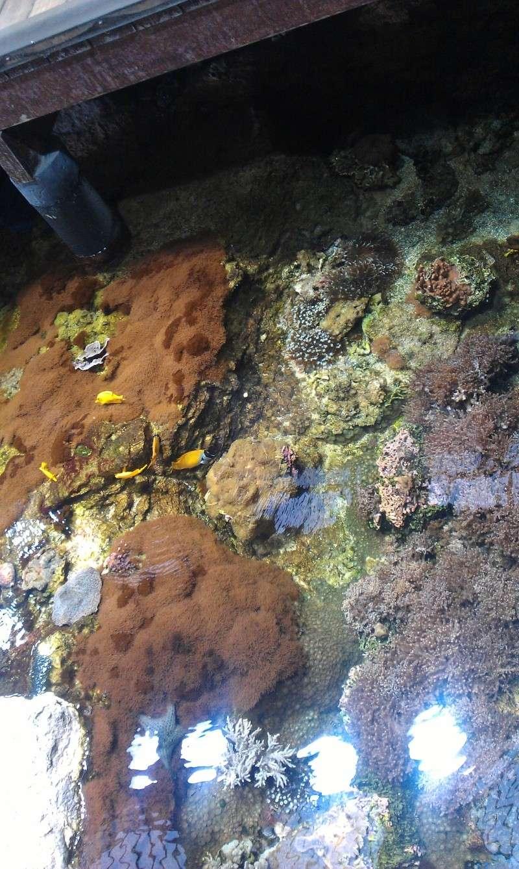 aquarium de Boulogne sur mer Imag0516