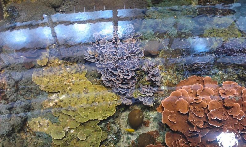 aquarium de Boulogne sur mer Imag0518
